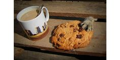 cookie thief - Get your paws off my stuff, fuzzbutt! - Cat Burglars Caught in the Act.