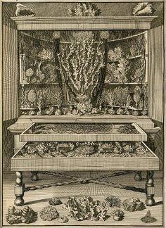 vincent, levinus (1715) wondertooneel der natuur [tome 2] 0295