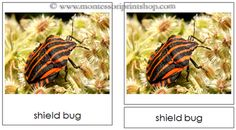 Insects - Montessori 3-Part Classified Cards - Printable Montessori Learning Materials for home and school.