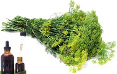 Natural Remedies, Flora, Herbs, Nature, Therapy, Diet, Plant, Naturaleza, Plants