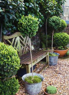 garden bench, potted topiaries