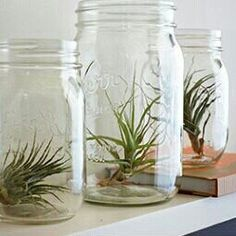 I am sure you love terrariums, and you can make your own terrarium with these unique DIY ideas for your indoor garden. Indoor terrariums are adorable and perfect for your indoor settings. Cool Plants, Air Plants, Garden Plants, Indoor Plants, Indoor Herbs, Moss Garden, Cactus Plants, Air Plant Display, Plant Decor