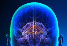 I lektion tre i Kureras serie Hjärnklok skola lär kiropraktor Martin Fransson oss mer om däggdjurshjärnan eller det limbiska systemet som ansvarar för alla delar av vår känslomässiga överlevnad. Neon Signs