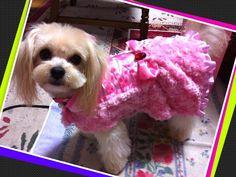 ドレス  #愛犬#いぬ#イヌ#犬#トイプードル#トイプー#クリーム#チワプー#ピンク#リボン#dog#DOG#doggy#poodle#toypoodle#cream#chiwawa#chiwapu- #pink by mary_meamea