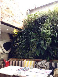 Vertical Garden Ideas Australia vertical garden at the rose of australia, erskineville. | house