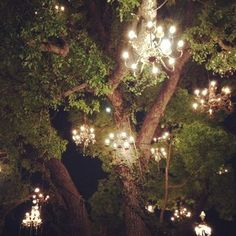 Chandelier Tree is a twinkling star in Silver Lake | Lakes ...