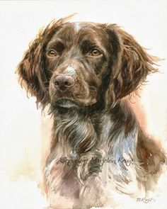 Pet portrait paintings of cats & dogs by animalartist Marjolein Kruijt. Author of two animal art BOOKS,specialized in wildlifeart & domestic animalportraits Watercolor Paintings Of Animals, Dog Paintings, Crayons Pastel, Brown Art, Vizsla, Dog Portraits, Animal Drawings, Pencil Drawings, Dog Art