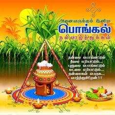 75 Best Pongal Wishes 2019 Images In 2019