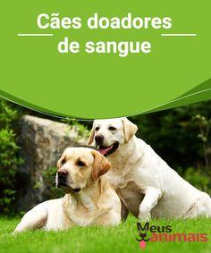 Cães doadores de sangue  Os #cães também necessitam de #transfusões de #sangue por causa de acidentes, cirurgias ou doenças e, às vezes, é bem difícil de se conseguir doadores. #Conselho
