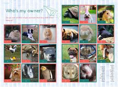 This cute guess who's pet quiz is a lovely addition for primary yearbooks! Yearbook Pages, Yearbook Ideas, Yearbooks, Student Life, Teaching Ideas, Pets, Animals, Animals And Pets, Animales