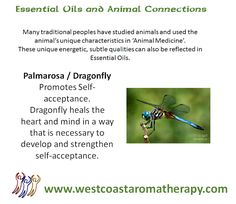Essential Oil and Animal Connection: Dragonfly and Palmarosa #westcoastaromatherapy #essentialoils #dragonfly #palmarosa