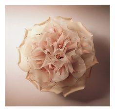https://flic.kr/p/woaLFQ | abstrait camellia | abstrait camellia ~}i{  抽象 山茶花  材質 : 棉 / 烏干紗 ~!!!