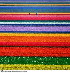 """O mundo é tão cheio de maravilhas que novos e surpreendentes lugares são descobertos a cada dia, seja por fotógrafos profissionais ou por amadores. Alguns locais são até difíceis de acreditar que realmente existem. De lagos cor de rosa a plantações de tulipas e canolas, de cânions e cavernas a cristais gigantes. São belezas produzidas...<br /><a class=""""more-link""""…"""