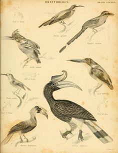 An introduction to the natural history of birds : - Biodiversity Heritage…