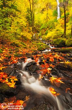 """Fall color surrounds Starvation Creek in Oregon's Columbia River Gorge"" ~ Photo by Joel Brady-Power Photography"