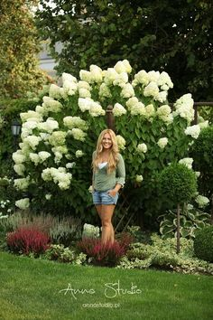 Gravel Garden, Garden Edging, Garden Borders, Potted Trees, Trees And Shrubs, Outdoor Trees, Hydrangea Garden, White Gardens, Back Gardens