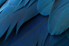Feathers Photo by J. Anderson -- National Geographic Your Shot