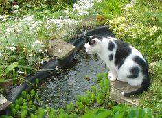 Cat & Pond