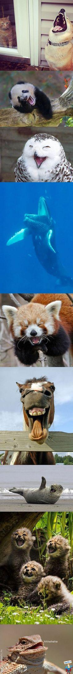 Animali divertenti che ridono