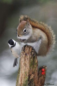 Squirrel Photograph Bonne année nouvelle by Andre Villeneuve on 500px #Chickadee