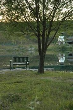 A view across the lake and a bench to fish from