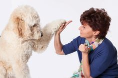 Goldendoodles Are So Incredible!