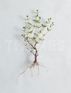 2014 Thymes Catalog on Behance