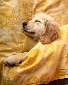 Vernon Miniature Pinscher Mix Puppies That Need A Home