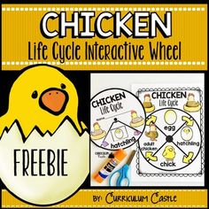 Virginia is for Teachers: A Teacher's Guide to Teaching Life Cycles: Frogs, Butterflies, and Chickens Oh My! Life Cycle Craft, Chicken Life, Butterfly Life Cycle, Science Crafts, Differentiated Instruction, Bird Crafts, Interactive Learning, Farm Theme, Spring Activities