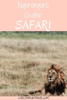 Planning an African safari? Tanzania should be on your list. Ngorongoro Crater was the highlight of our safari and of Tanzania. Blog post includes the animals we saw, where we fit it into our itinerary, and where we stayed.