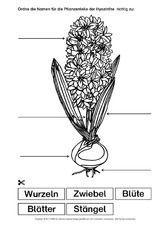 Hyazinthe-Bezeichnungen.pdf Pubs And Restaurants, Silver Anklets, Lower Lashes, Lip Care, Trip Planning, German, Anna, School, School Worksheets