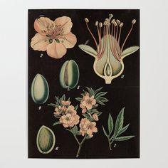 Illustration Art Notecard Mini Print Almond Leaf Postcard A6 Postcard Wall Art Botanical Art Nature Card Art Card
