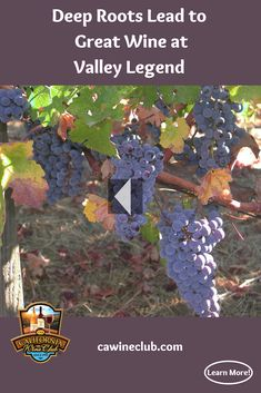 At Valley Legend Wines, Founder/Wine Maker Greg Lawson's meticulous winemaking begins with careful selection of grapes farmed to his stringent specifications. California Wine Club, Wine Varietals, Wine Stand, Napa Valley Wine, 45 Years, White Wine, Wines, Discovery