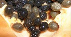 Como usar as sementes de mamão para desintoxicar rins, fígado e curar o aparelho digestivo!