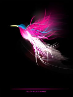 Hummingbird  -  cabezadecondor.deviantart.com