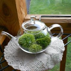 Moss Terrarium,  Glass TEAPOT Terrarium, Small Teapot Terrarium, Great CHRISTMAS GIFT, Gift under 50, Holiday Gift Guide on Etsy, $35.00. This is probably the cutest thing I have seen in weeks.