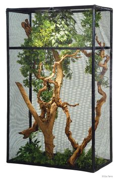 , This would be good for bringing stick insects, butterflies and other animals ins. , This would be good for bringing stick insects, butterflies and other animals inside - flexarium reptile Enclosure. Lizard Habitat, Reptile Habitat, Reptile Cage, Chameleon Enclosure, Snake Enclosure, Chameleon Terrarium, Terrarium Reptile, Bearded Dragon Habitat, Bearded Dragon Cage
