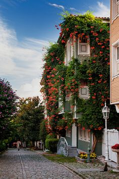 Flowers line the houses along the street leading towards Hagia Sophia and the Blue Mosque, Istanbul