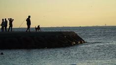 Dog is Jumping Into The Sea To Catch The Thrown Ball Stock Video Footage - VideoBlocks