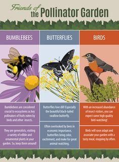 Protecting Pollinators Pollinators Bee Save The Bees 400 x 300