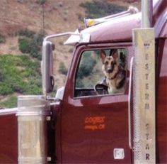 """Responsible Pet Ownership Blog: Trucking """"Tails"""" From the Open Road"""