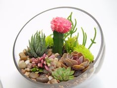 Gorgeous Mother's Day Gift Alternatives | Succulent Terrariums Instead of Flowers https://popshopamerica.com/blog/gorgeous-mothers-day-gift-alternatives/
