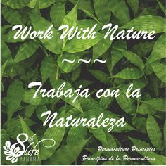 Mother Nature works in certain ways; if we observe and work with her, we can live well and sustainably.  * La Madre Naturaleza trabaja de cierta manera; si observamos y trabajamos con ella, podemos vivir bien y sustentablemente.  * #permaculture #love #community #nature #personalbest #mothernature #consciousness #8thLifePanama