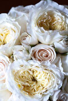 ❉ⓛⓞⓥⓔ♡㋛~via Ana Rosa White Peonies, White Roses, White Flowers, Cream Flowers, My Flower, Beautiful Flowers, Beautiful Things, House Beautiful, Beautiful Images