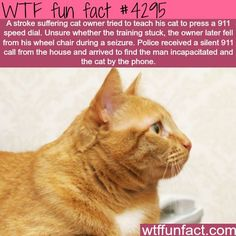 Cat learns how to dial 911 and saved it's owner life - WTF fun facts:
