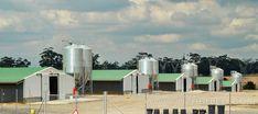 Prefabricated poultry farm industrial farm shed Farm Shed, Farm House, Poultry Farming, Home Technology, House Layouts, Steel Frame, Farms, Modern Design, Industrial
