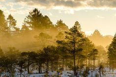 Wintersun by Knut Trondsen on Norway, Sunrise, Country Roads, Celestial, Landscape, Pictures, Photography, Outdoor, Photos