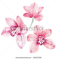 Find Watercolor Pink Orchid Flowers Isolated On stock images in HD and millions of other royalty-free stock photos, illustrations and vectors in the Shutterstock collection. Orchid Flower Tattoos, Pink Orchids, Orchid Flowers, Tree Images, Zodiac Art, Body Art, Royalty Free Stock Photos, Watercolor, Drawings
