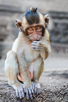 Small cute monkey...