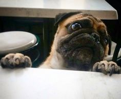 Can someone feed me?